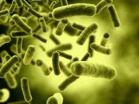 Virüsten Organik Pil Üretildi!